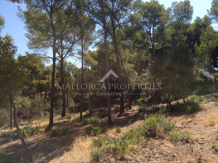 property-for-sale-in-mallora-santa-ponsa-calvia--MP-1198-03.jpg