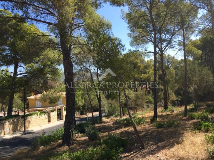property-for-sale-in-mallora-santa-ponsa-calvia--MP-1205-01.jpg