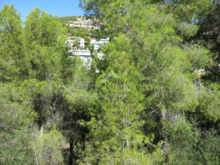 property-for-sale-in-mallora-costa-d-en-blanes-calvia--MP-1346-01.jpg