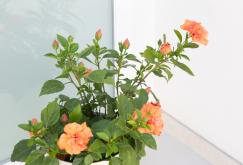 property-for-sale-in-mallora-bendinat-calvia--MP-1363-13.jpeg