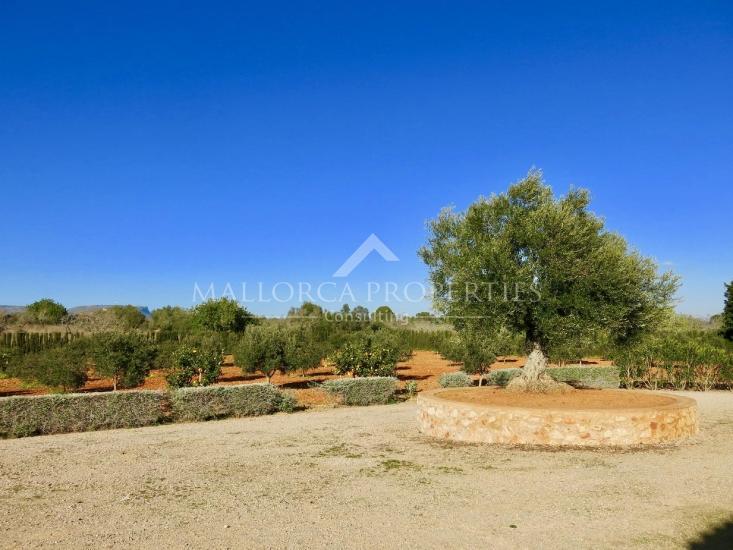 property-for-sale-in-mallora-llucmajor-rural-llucmajor--MP-1386-02.jpg