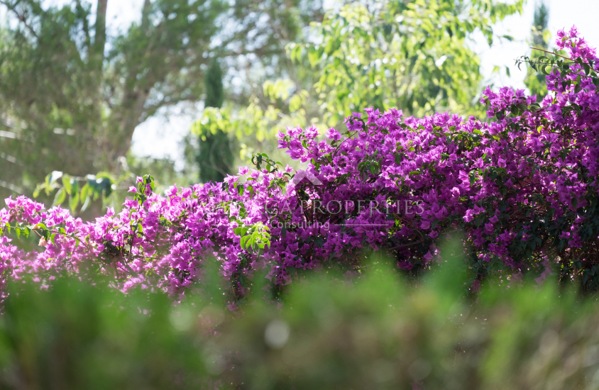 property-for-sale-in-mallora-bendinat-calvia--MP-1408-19.jpg