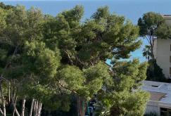 property-for-sale-in-mallora-portals-nous-calvia--MP-1535-16.jpg